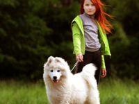 Взаимодействие с животными